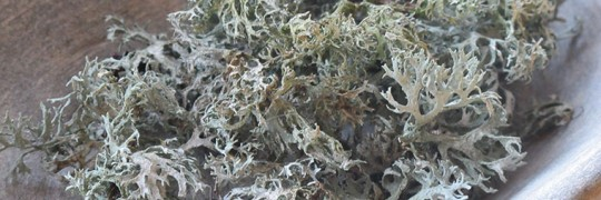 Lichen gathered in a marble bowl